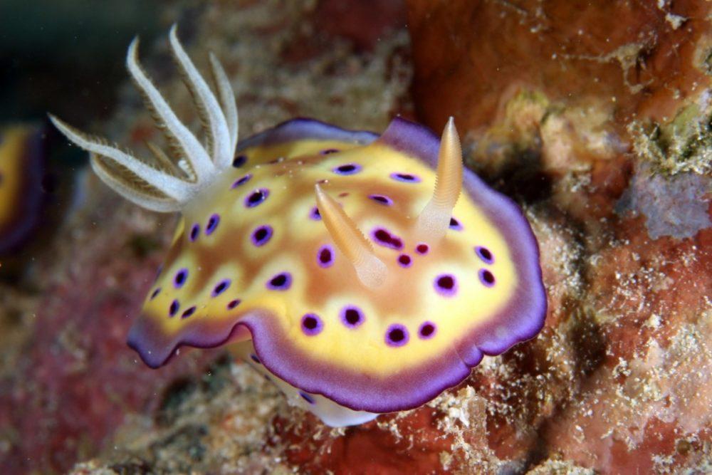 Biologie sous-marine : saison 2020