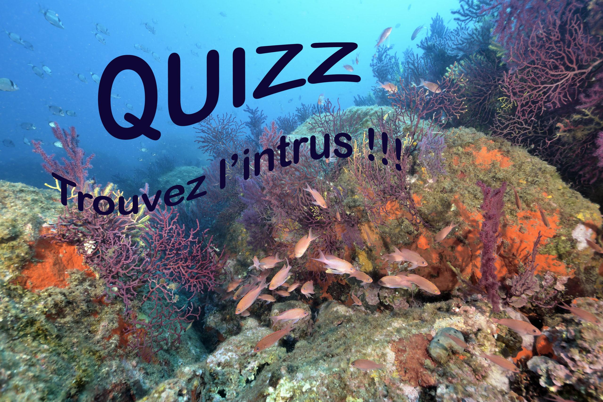 Biologie : Quizz Cherchez l'intrus !!