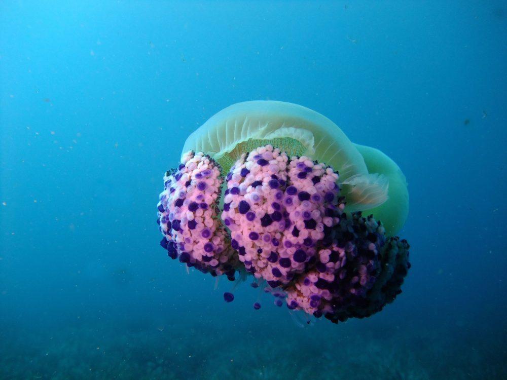 Biologie Sous-marine… saison 2021